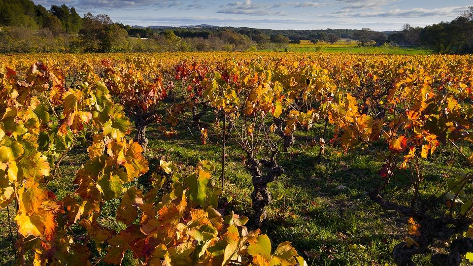 mejores viñedos del mundo