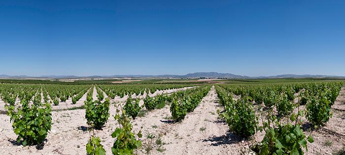 Tierra para viñedos
