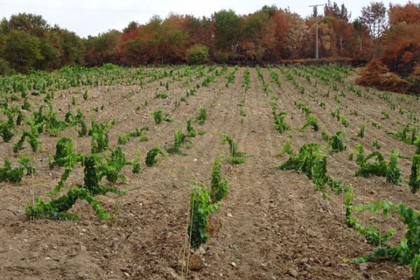mejores lugares para sembrar viñas
