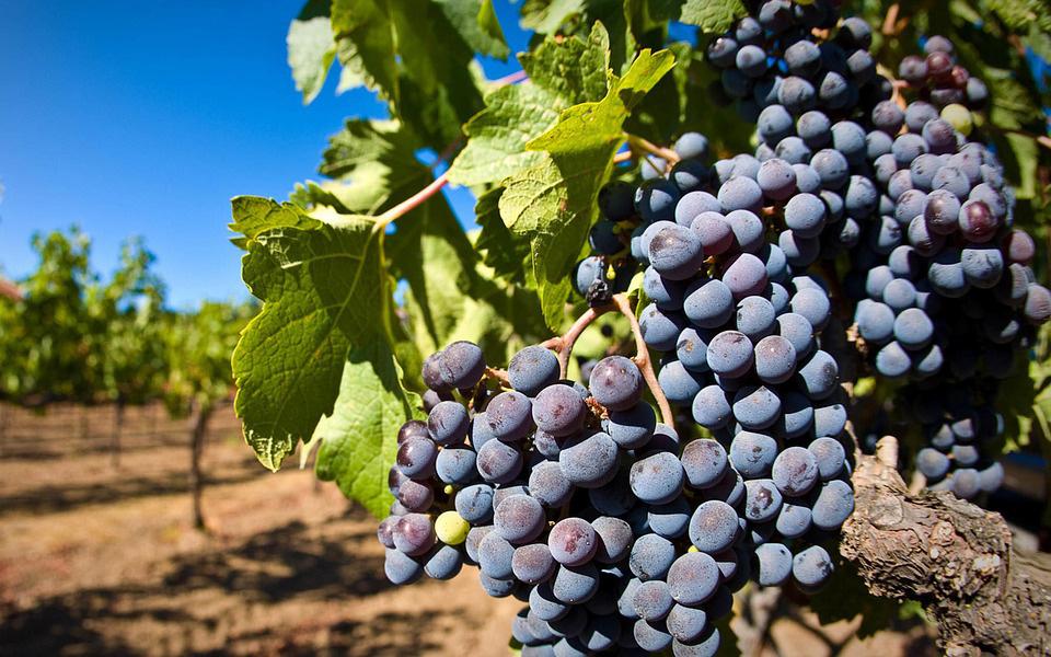 mejores lugares para cultivar viñas